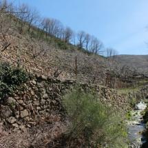 Bancales en el Valle del Jerte