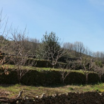 Bancales del Valle del Jerte