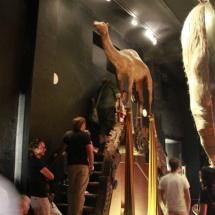 Museo Dalí Figueras: escalera Mae West