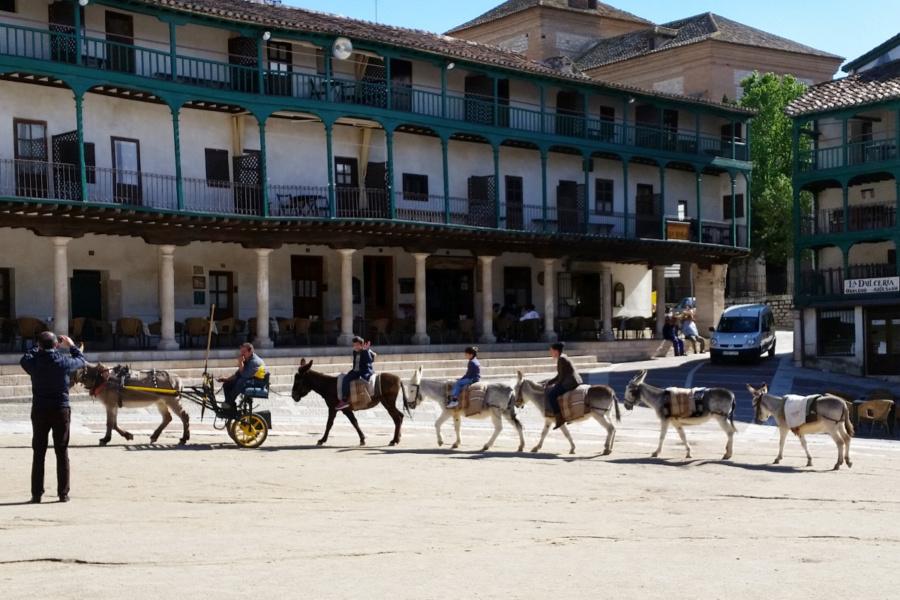 Caravana de burros en la Plaza Mayor de Chinchón