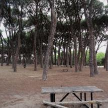 Zona de picnic en la Casa de Campo