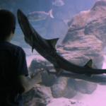 Consejos para tu visita al Museo Marítimo del Cantábrico