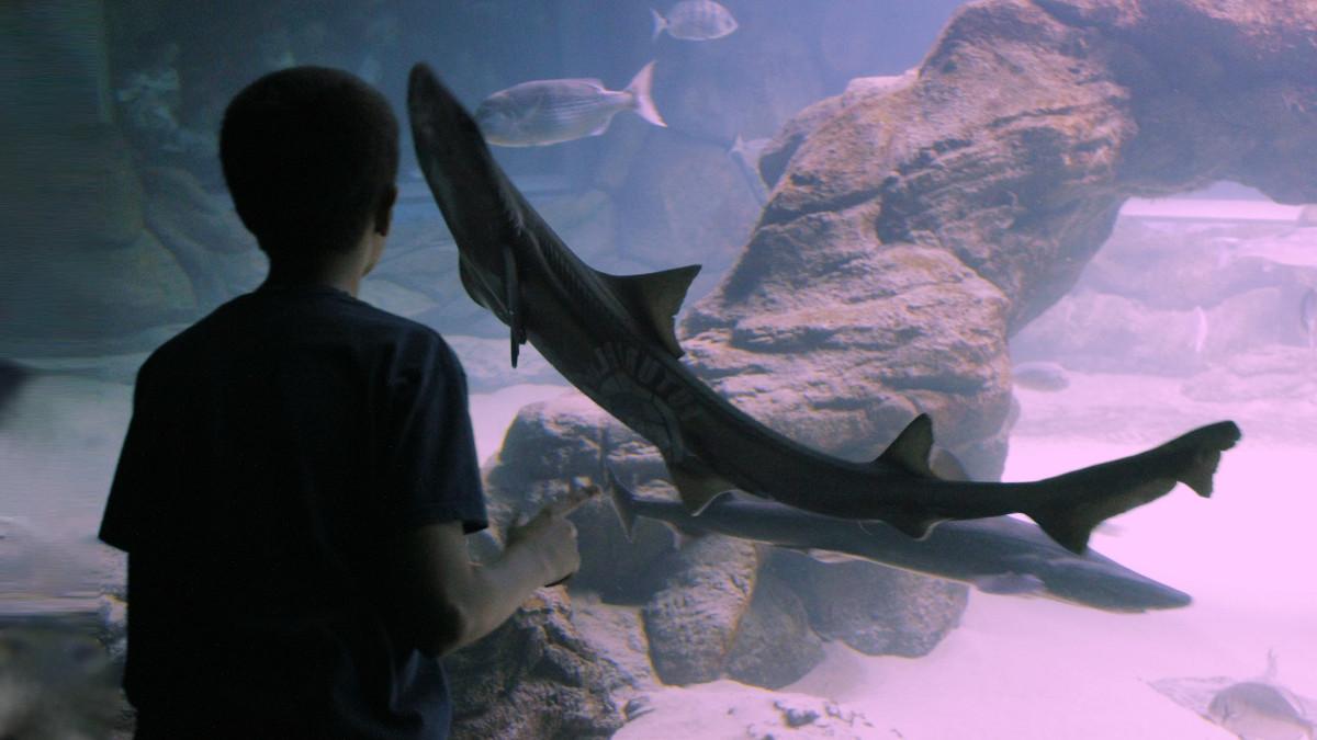 Museo Marítimo del Cantábrico de Santander consejos para la visita