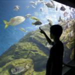 Visita al Museo Marítimo del Cantábrico, en Santander