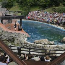Exhibición de leones marinos en el Parque Natural de Cabárceno