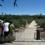 Ruta con niños: 5 árboles singulares de la Casa de Campo