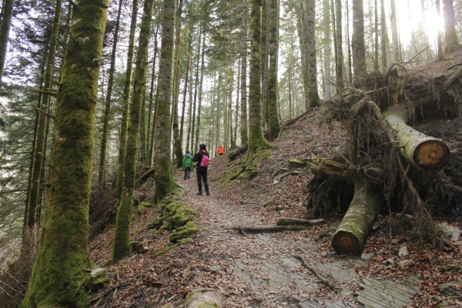 Cuida el entorno de la Selva de Irati para que los próximos visitantes la disfruten tanto como tú.