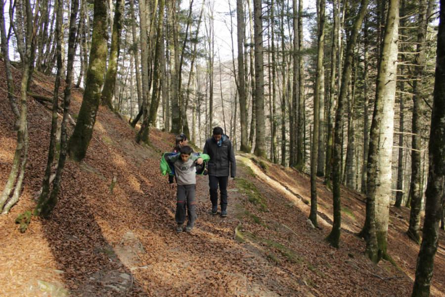 Paseo por la Selva de Irati, en Navarra