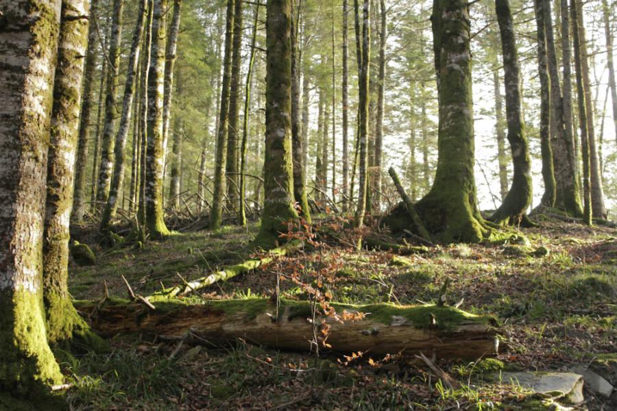 Consejos para disfrutar de una excursión por la Selva de Irati con los niños.
