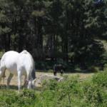 10 planes de naturaleza para una Semana Santa en Madrid