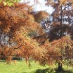 Parque Yamaguchi: jardín japonés en Pamplona