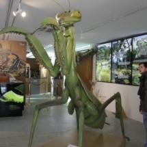 Mantis gigante del Insectpark