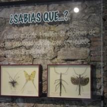 Sala del Insectpark