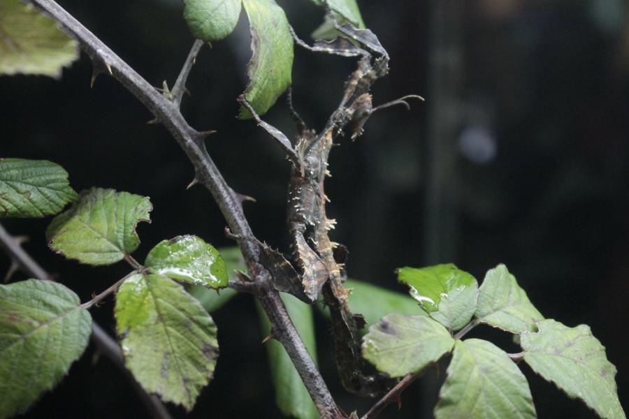 Bicho del Insectpark
