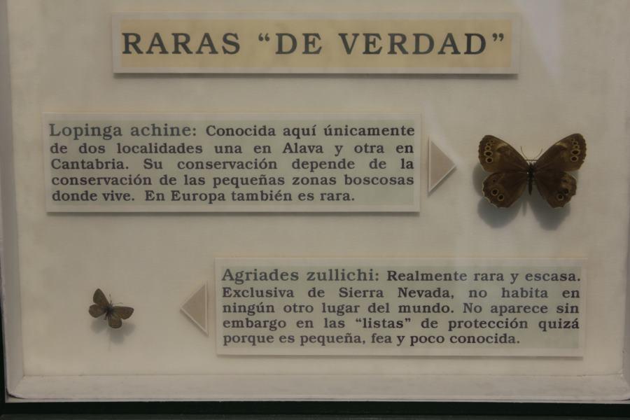 Cartel explicativo del Insectpark