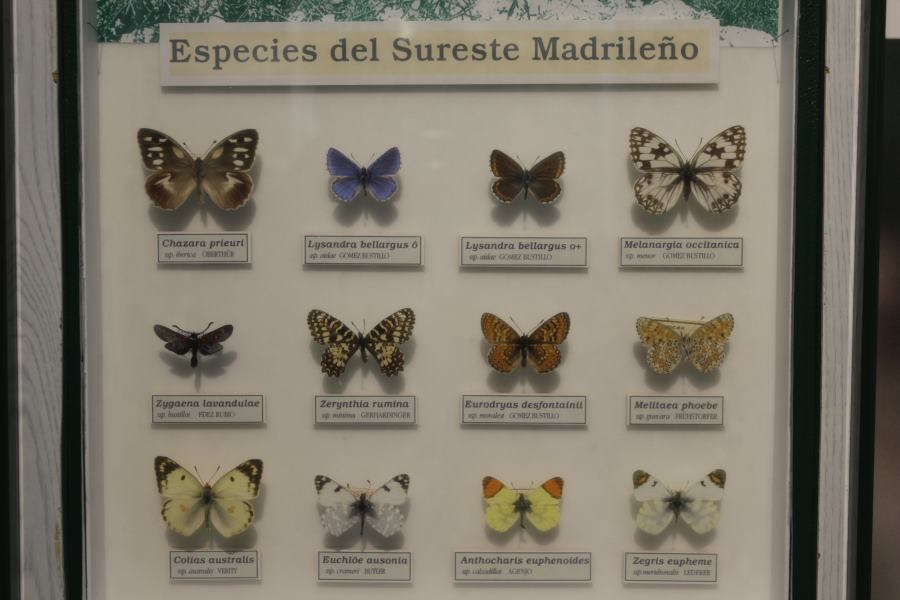 Mariposas del Insectpark