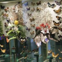 Mariposas en el Insectpark