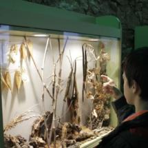 Urna del Insectpark