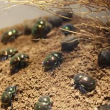 Terrario del Insectpark