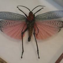 Mariposa en el Insectpark
