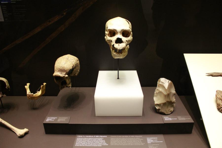 Cráneo humano en el Museo Arqueológico