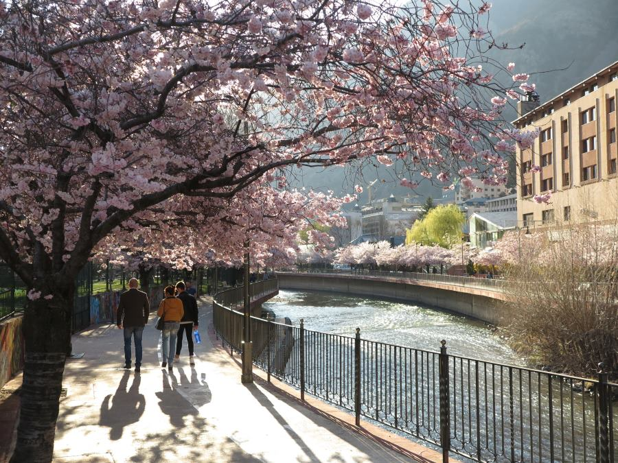 Cerezos junto al río Valira, en Andorra la Vella