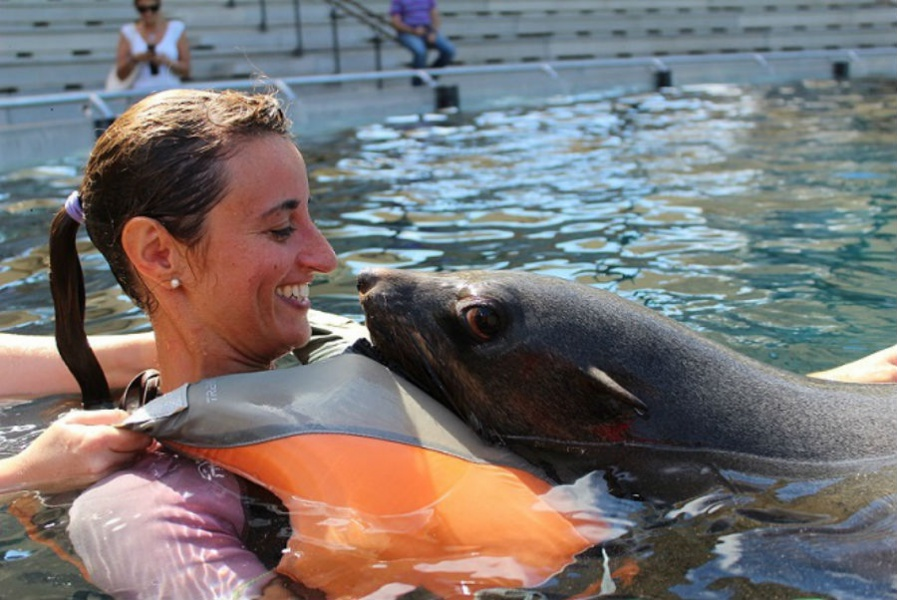 Baño con osos marinos, una nueva actividad en Faunia