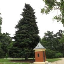 Conífera en el Parque del Oeste de Madrid