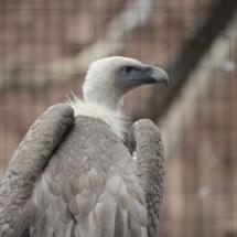 Safari Park Madrid, en Aldea del Fresno