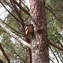Zona de protección de aves del Parque del Oeste de Madrid