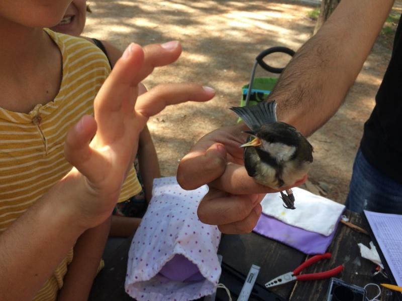 Anillamiento de aves con niños