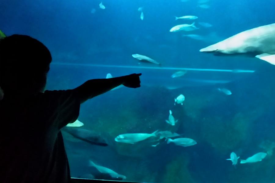 Los acuarios son siempre una visita emocionante para los niños