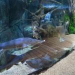 El Acuario de Gijón es un zoo submarino espectacular