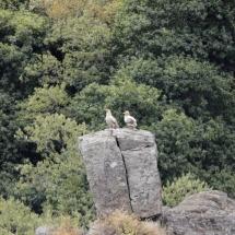 Aves en el Parque Natural Arribes del Duero