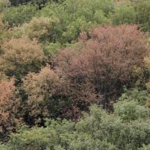 Vegetación del entorno de las Arribes del Duero
