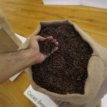 Cacao descascarillado en el Museo del Chocolate Astorga