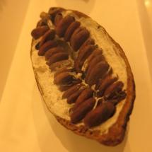 Interior del fruto del cacao
