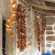 Ristras colgadas de los techos del Pazo de Sabadelle