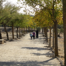 Paseo al yacimiento arqueológico de Segóbriga