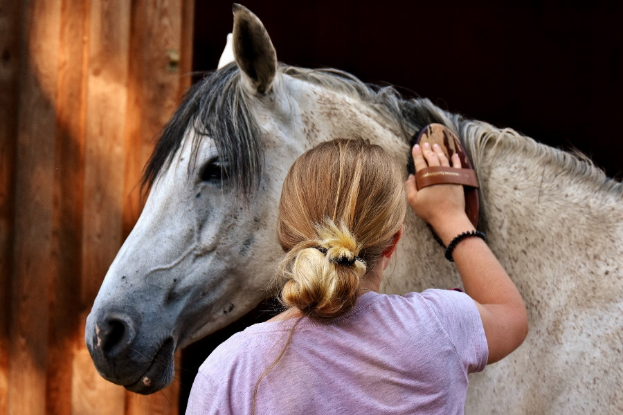 Las niñas y niños pueden cuidar de los caballos de la Madrid Horse Week