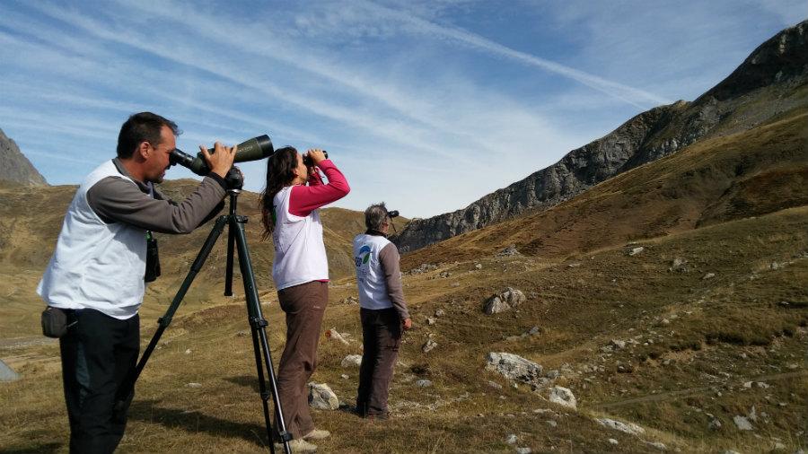 Actividades para aprender a observar a los pájaros en familia