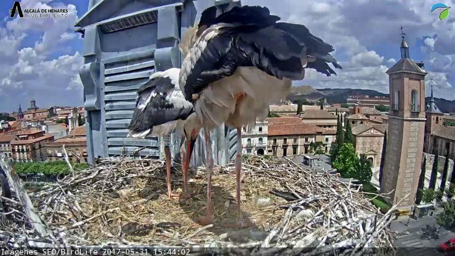 Observación de cigüeñas en Alcalá de Henares