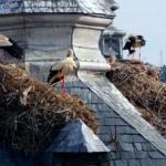 Dónde ver cigüeñas: las aves que traían a los niños