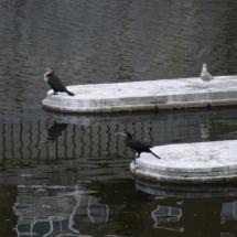 Aves en el Madrid Río