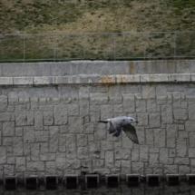 En un paseo por el Madrid Río puedes avistar aves diferentes a las palomas o gorriones de otros parques