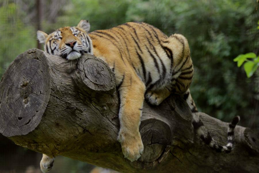 Compartimos nuestros zoos favoritos de ir con niños, ¡toma nota!