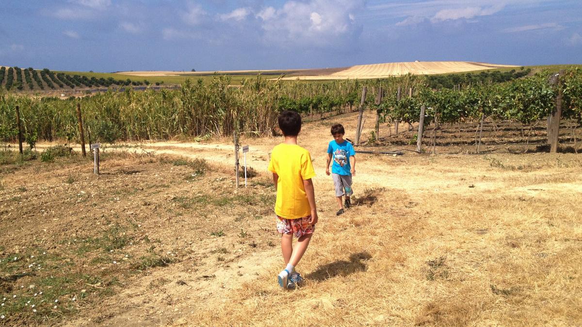 Campos de la Bodega y Almazara ecológica Sancha Pérez, en la provincia de Cádiz
