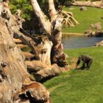 Bioparc de Valencia: animales de cerca
