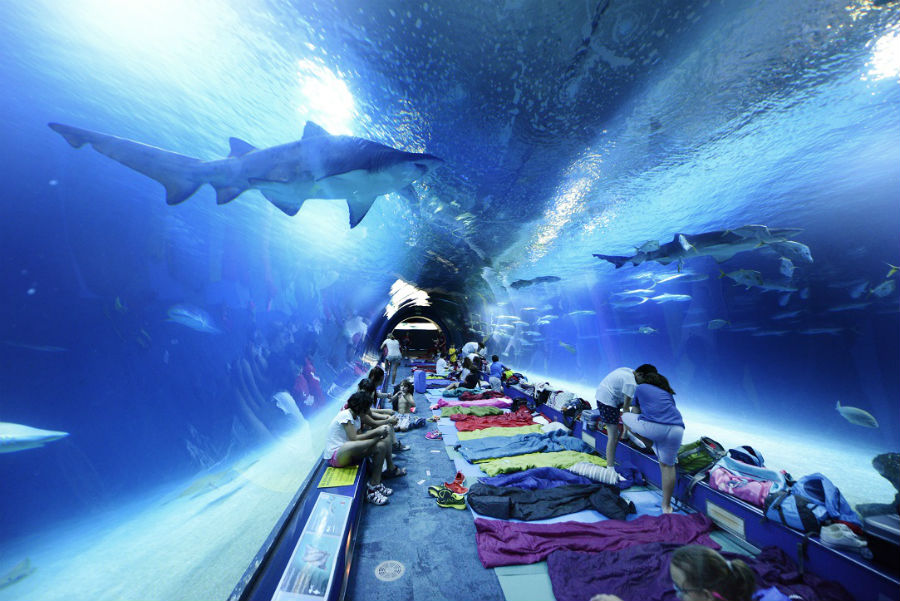 En l'Oceanogràfic de Valencia se puede dormir con tiburones