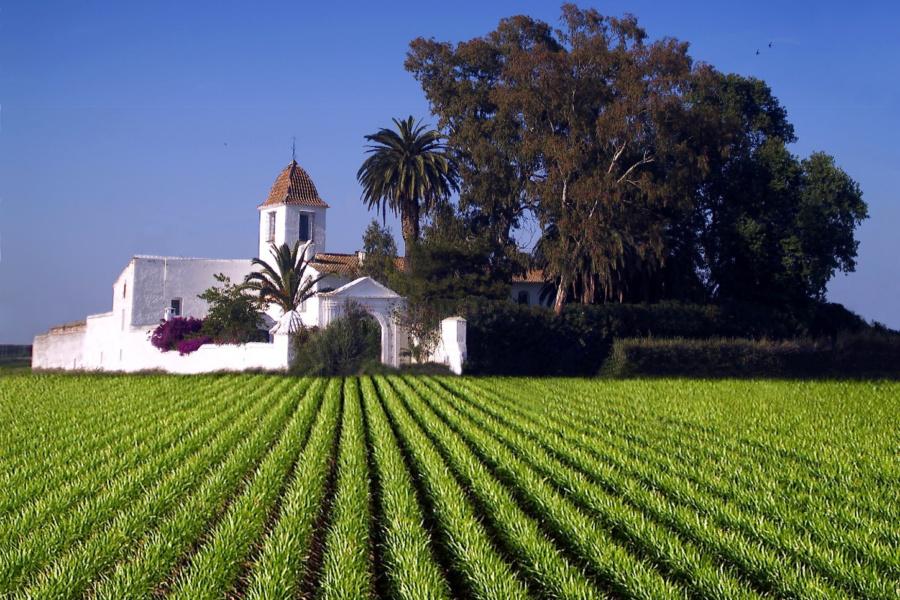 Campo de chufa en Alboraya; al fondo, Museo de la Horchata